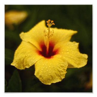 Rainy Day Hibiscus Photograph