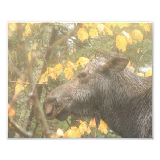 Rainy Day Moose Photo Print