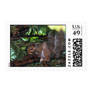 Rainy Day Squirrel Postage