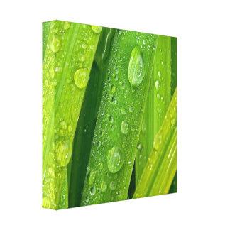 Rainy drops II Canvas Print