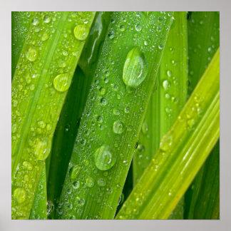 Rainy drops II Poster