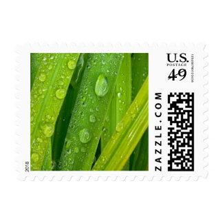 Rainy drops II Stamps