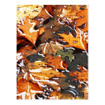 Rainy Fall Leaves Post Card