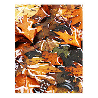 Rainy Fall Leaves Postcard