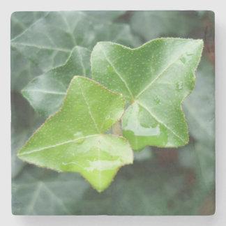 Rainy Ivy Stone Coaster