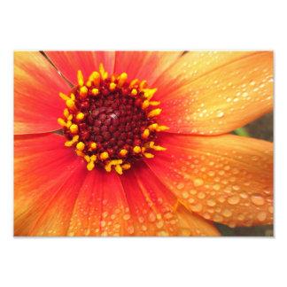 Rainy Orange Dahlia 14x10 Photographic Print