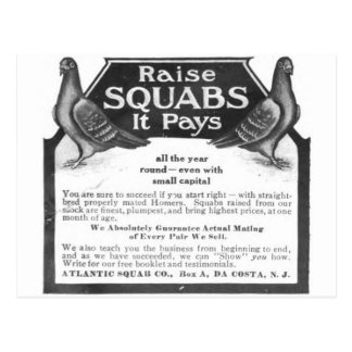 Raise Squabs - It pays all the year round Postcard