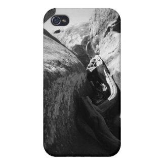 Raíz del árbol en grieta iPhone 4 protectores
