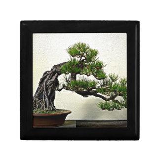 Raíz sobre árbol de los bonsais del pino de la roc cajas de recuerdo