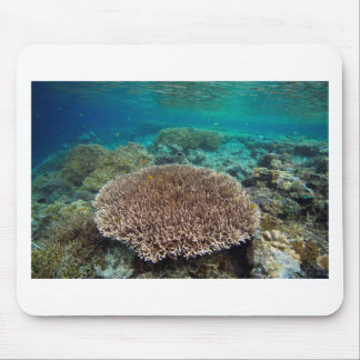 Raja Ampat islands coral reef underwater world Mouse Pad
