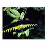 Rajah Brooke's male birdwing, Malaysia Post Cards