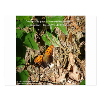 """Ralph W Emerson """"Pace Of Nature"""" Wisdom Quote Gift Postcard"""