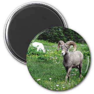 Ram and Mountain Goat Magnet