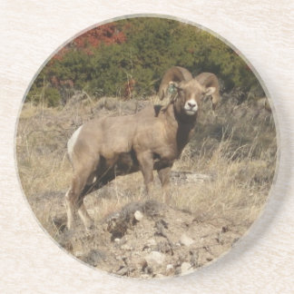 Ram, CrowButteOutfitters.com Coaster