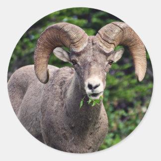 Ram Grazing Classic Round Sticker