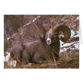 Ram merry Christmas card