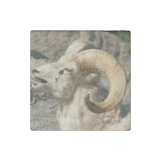 Ram or Bighorn Sheep Laughing Stone Magnet