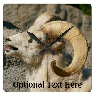 Ram or Bighorn Sheep Laughing Square Wall Clock