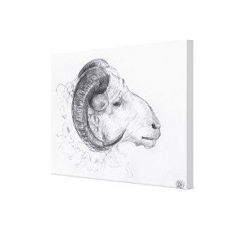 Ram - Original Drawing - Canvas Print
