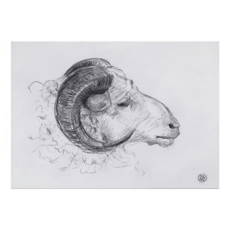 Ram - Original Drawing - Poster