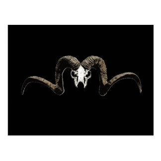 Ram skull postcard