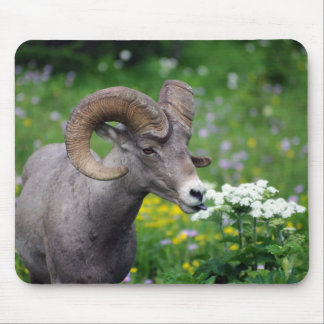 Ram - Smelling the Flowers Mouse Pad