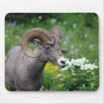 Ram - Smelling the Flowers Mouse Pads