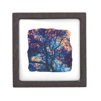 Rama azul anaranjada del extracto del roble caja de regalo de calidad