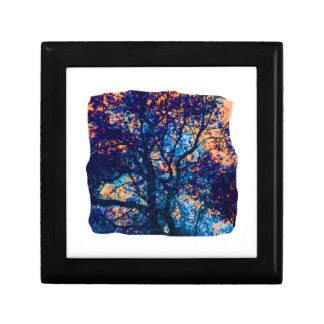 Rama azul anaranjada del extracto del roble caja de recuerdo