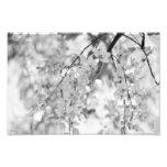 Rama blanco y negro del flor impresiones fotográficas