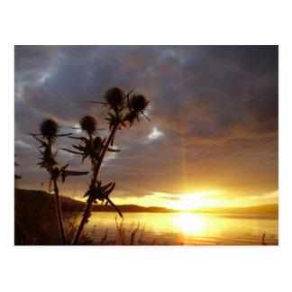 Rama con puesta del sol - isla del cardo Mull Postales