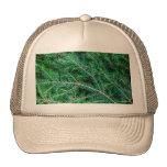 Rama de árbol de abeto gorras