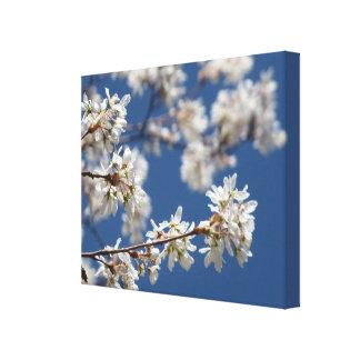 Rama de árbol de Dogwood de florecimiento Impresión En Lienzo