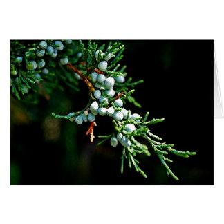 Rama de árbol de pino tarjeta