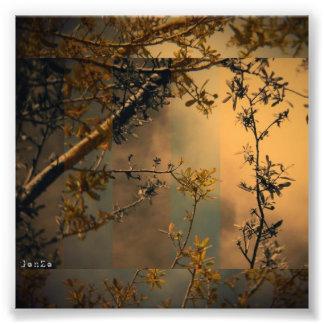 Rama de árbol fotografía