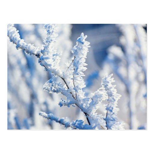 Rama de árbol Nevado Postal