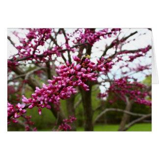 Rama de árbol púrpura de florecimiento en primaver felicitacion