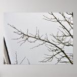 Rama de árbol sin las hojas contra el cielo nublad impresiones