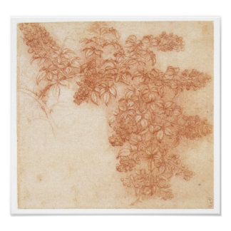 Rama de Blackberry, Leonardo da Vinci Póster