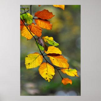 Rama de haya en el otoño con hojas coloridas