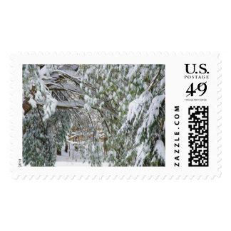 Rama de un árbol del invierno cubierto con nieve franqueo