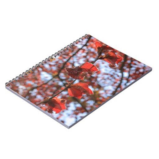 rama de una haya de cobre cuadernos