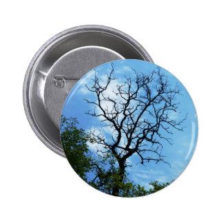 rama del acacia pin redondo de 2 pulgadas