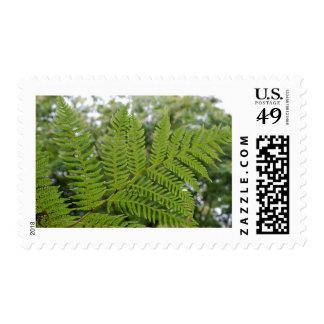 Rama del helecho timbre postal