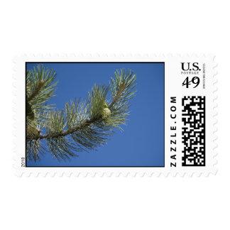Rama del pino y cielo azul sellos