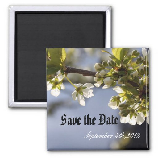 rama floreciente de la cereza blanca de la imán cuadrado