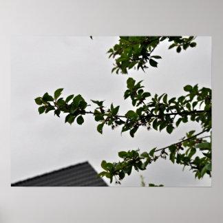 Rama frondosa verde contra el cielo nublado impresiones