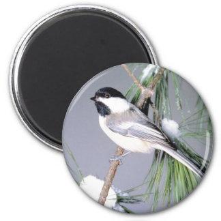 Rama nevada del pájaro imán redondo 5 cm