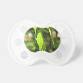 Rama verde del abedul con las hojas chupetes de bebe