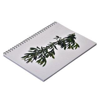 Rama verde oscuro aislada contra el backgroun blan cuadernos